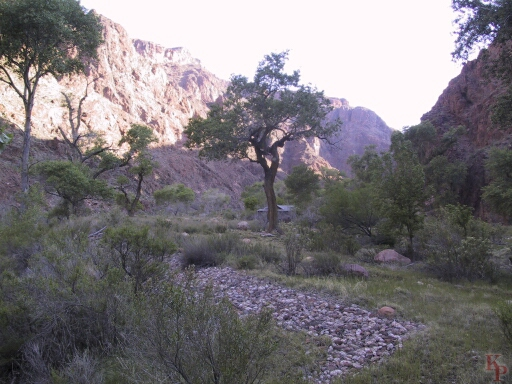 Grand Canyon, Morning on Bright Angel Creek at Phantom Ranch
